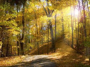 Осенний лес. Дизайнерский свитер в моём исполнении.. Ярмарка Мастеров - ручная работа, handmade.