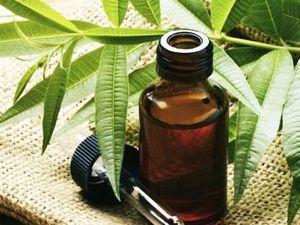 Магические свойства масла чайного дерева. Ярмарка Мастеров - ручная работа, handmade.