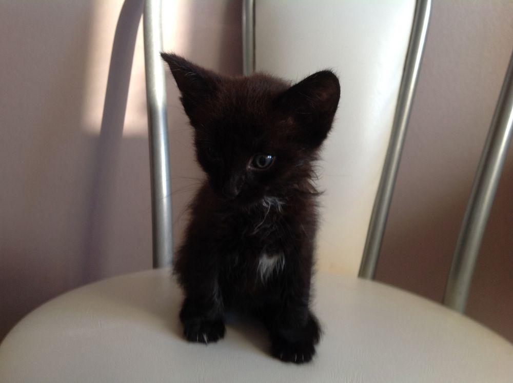 котёнок, помощь животным