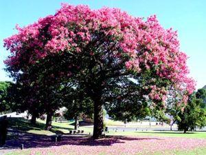 Эфирное масло Розового дерева Бразилия.. Ярмарка Мастеров - ручная работа, handmade.
