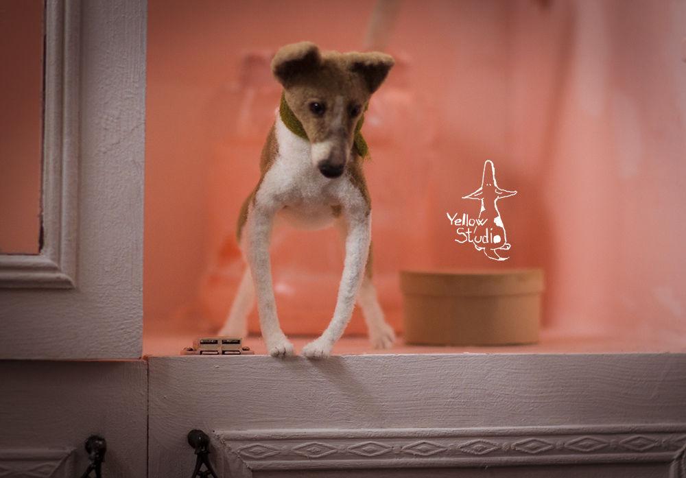 Моня собак, фото № 13