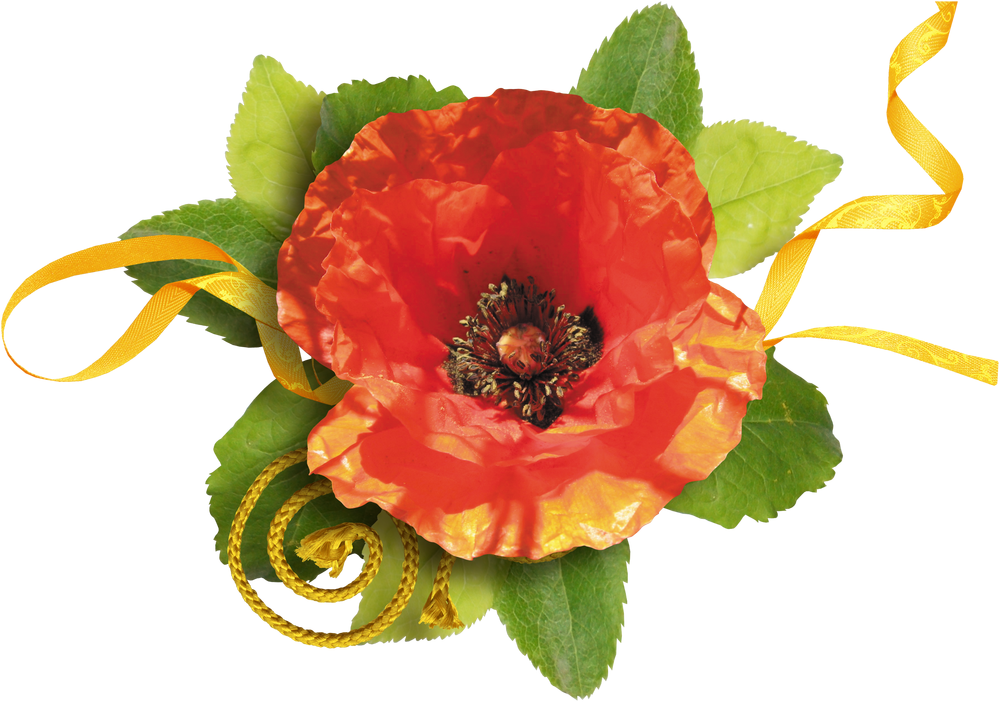 дагестана, отвечает фото на прозрачной основе цветы маки джина столь