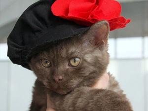 Стильные котики — мода для пушистых питомцев. Ярмарка Мастеров - ручная работа, handmade.