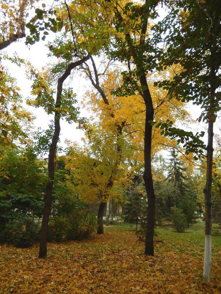 осень в самаре