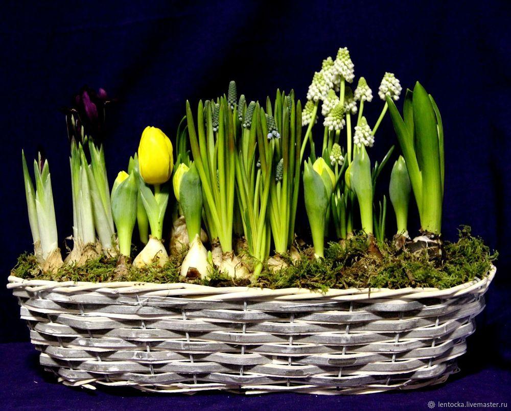 8 марта подарок, новинки магазина, к 8 марта, недорогой подарок, для женщин, букет, акция к 8 марта