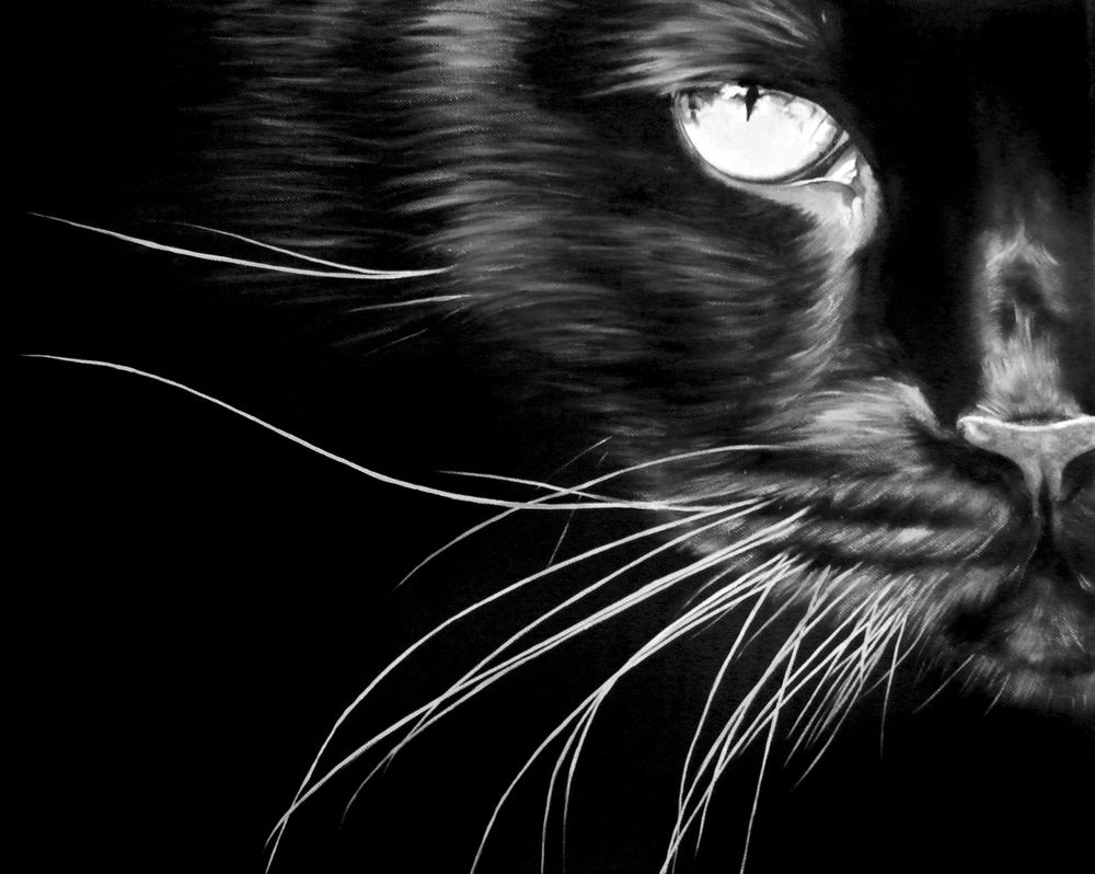 коты, картина с котом