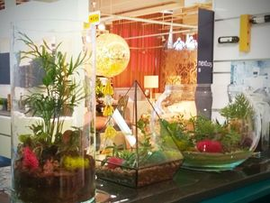 Флорариум — это модно!. Ярмарка Мастеров - ручная работа, handmade.