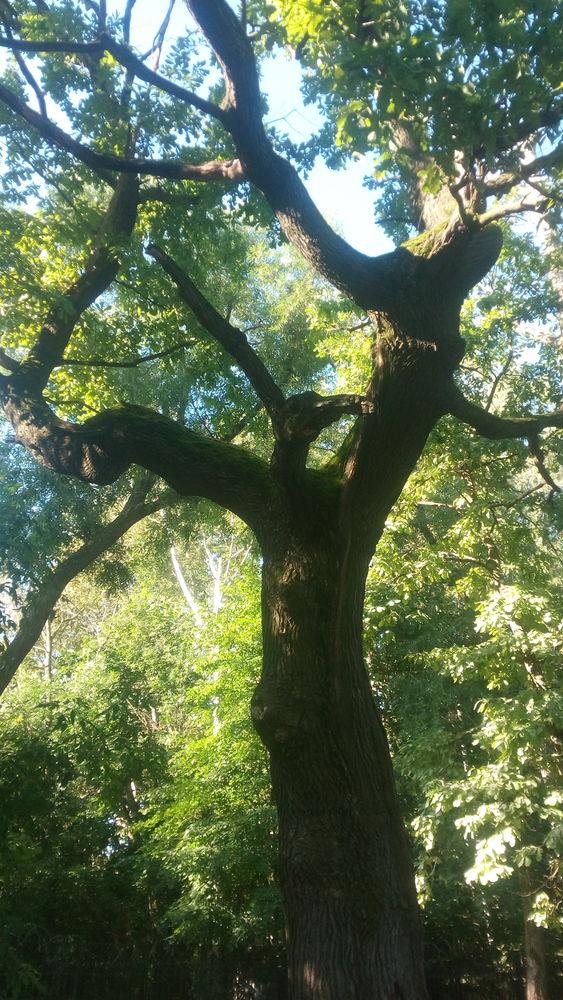 природа, москва, радуга, радужный, фото лето