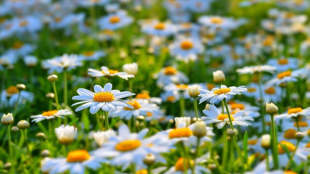 пчелы, лето - маленькая жизнь