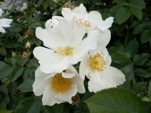 """Новинка — сьют """"Нежность майской розы"""". Ярмарка Мастеров - ручная работа, handmade."""