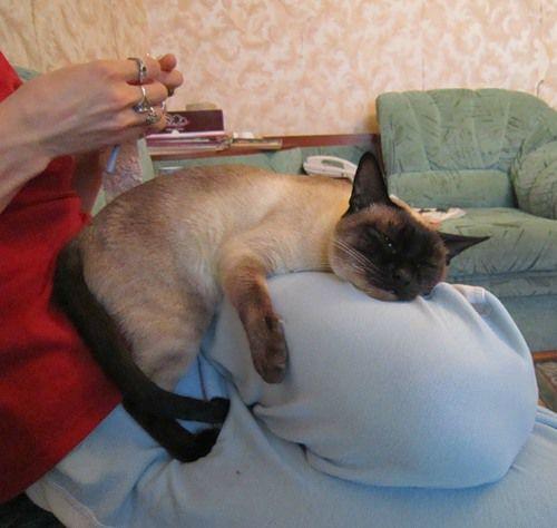 Ну как без кошек???, фото № 2