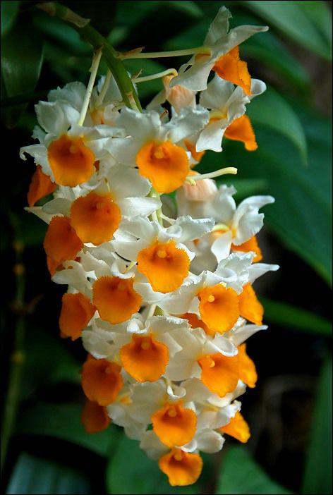 гороскоп, цветы, цветочный, осень, ноябрь, орхидея, характер