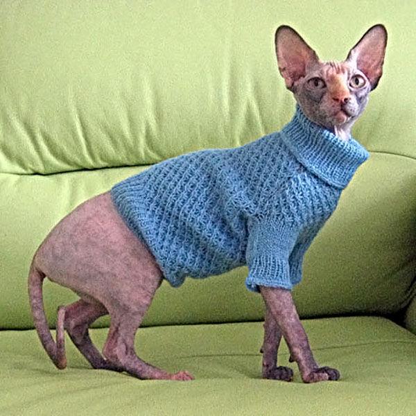 одежда собакам