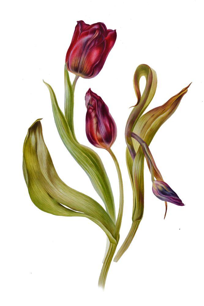 акварель, цветы