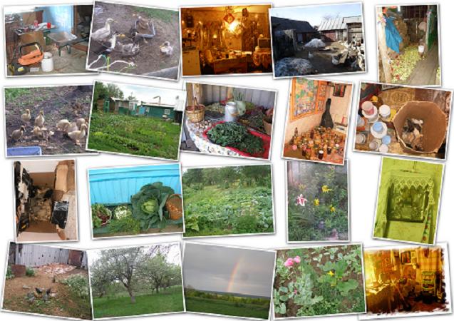 хмелёвка, деревня, село, природа, дом в деревне, россия, красота, фото природы, коллаж, дача