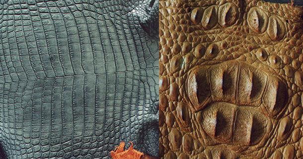 Как отличить кожу крокодил