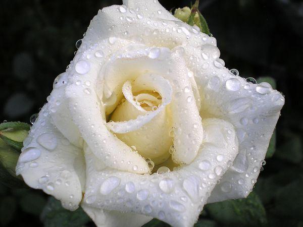 Что говорят цветы.....!!!!, фото № 9