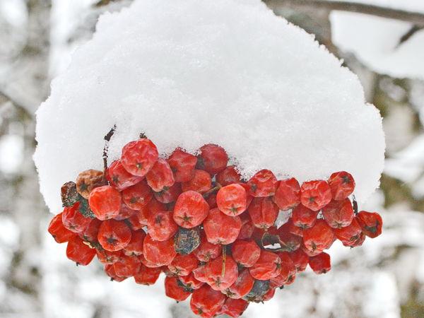 Первый снег | Ярмарка Мастеров - ручная работа, handmade