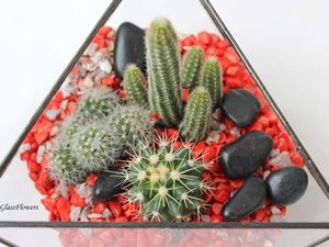 О кактусах и кактусятах. Ярмарка Мастеров - ручная работа, handmade.
