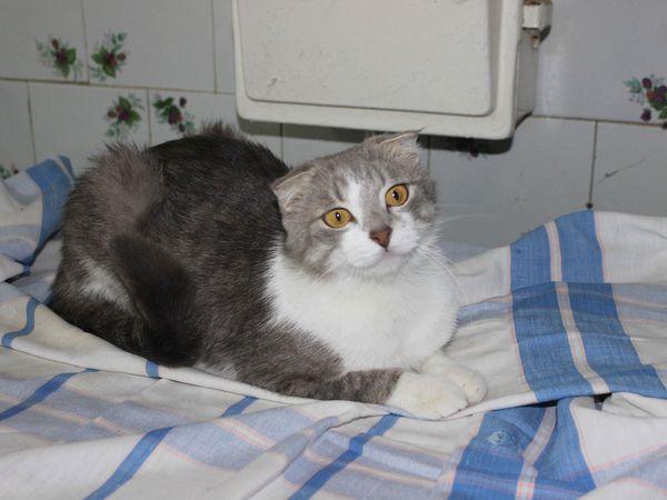 Имя ей... Кошка! И она очень хочет домой!!! | Ярмарка Мастеров - ручная работа, handmade