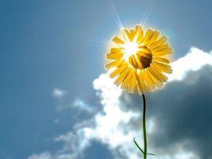 Солнечное путешествие! Жизнь прекрасна!   Ярмарка Мастеров - ручная работа, handmade