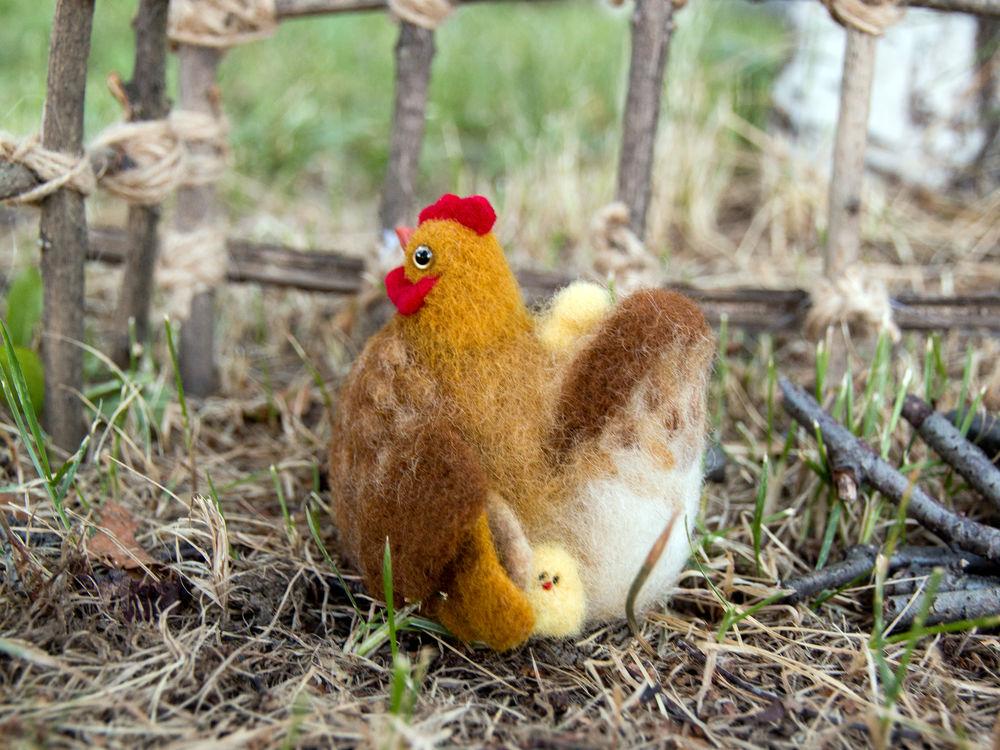 клуша, цыплятки