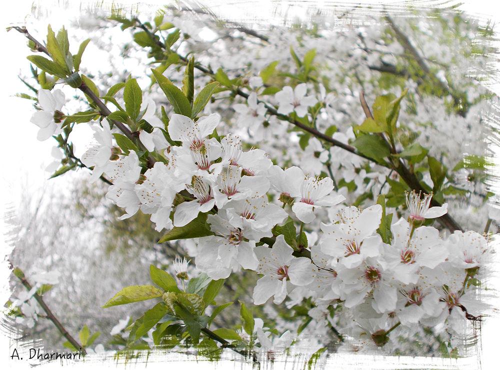 поздравление, 8 марта, цветы, весна, подарок женщине, подарок на 8 марта, природа, вишня