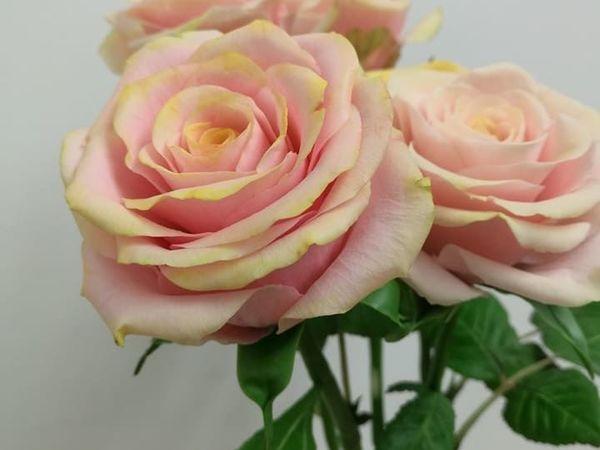 Мк Роза | Ярмарка Мастеров - ручная работа, handmade