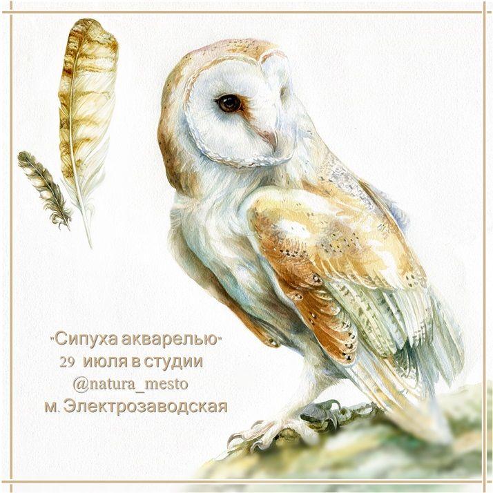 сова сипуха, рисуем сову с натуры, перо акварелью