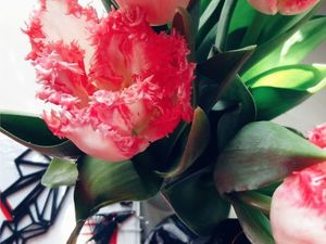 Всех представительниц прекрасного пола, с праздником весны!. Ярмарка Мастеров - ручная работа, handmade.