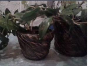Видео мастер-класс: декорируем старые цветочные горшки своими руками. Ярмарка Мастеров - ручная работа, handmade.