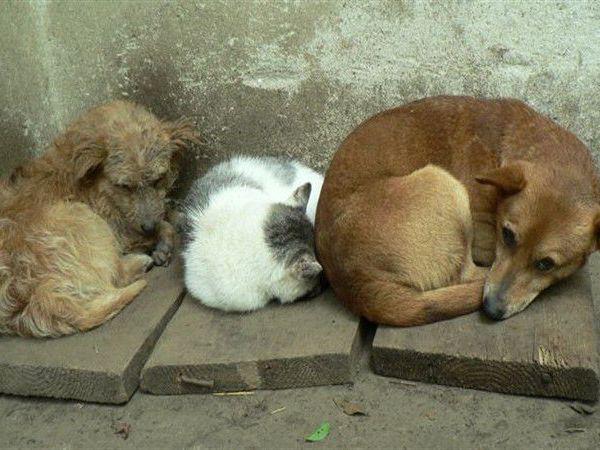 Животным Кожуховского приюта очень нужна наша помощь!!!! | Ярмарка Мастеров - ручная работа, handmade