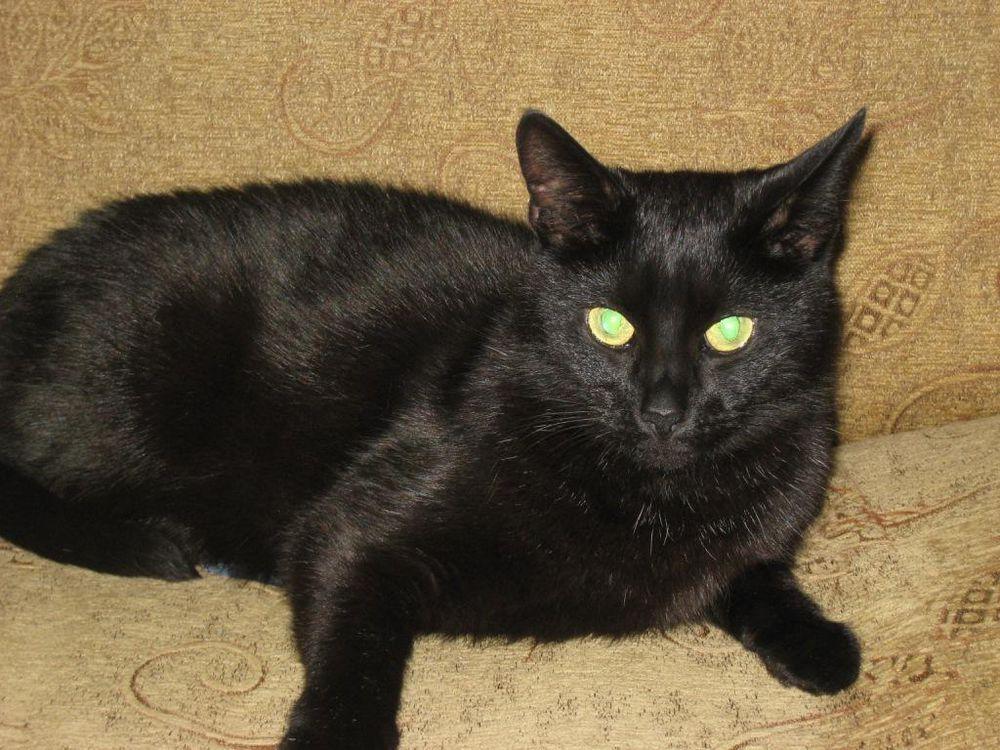 Кот и полтергейст., фото № 4