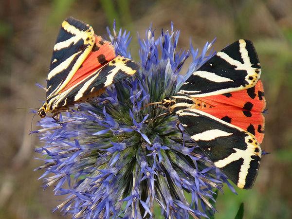 Интересные бабочки | Ярмарка Мастеров - ручная работа, handmade