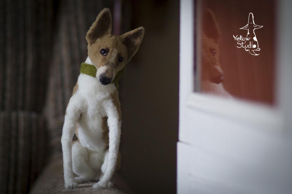 Моня собак, фото № 9