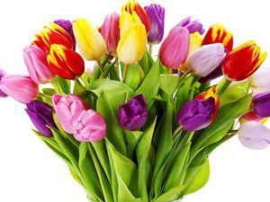 Милые дамы, поздравляю вас с праздником весны! | Ярмарка Мастеров - ручная работа, handmade