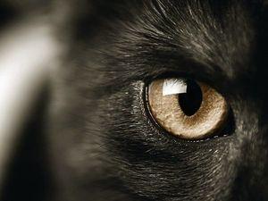 Коты Реально Защищают Дом от Злых Духов И Негативной Энергии!. Ярмарка Мастеров - ручная работа, handmade.