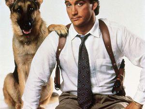 Собаки-актёры и не только) | Ярмарка Мастеров - ручная работа, handmade