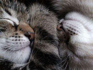 Муся, Майка, рязанские щенки, оранжерейные кошки, Айдан и Жуча ждут вашей помощи | Ярмарка Мастеров - ручная работа, handmade