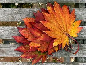 """Коллекция """"Влюбленная в осень"""". Ярмарка Мастеров - ручная работа, handmade."""