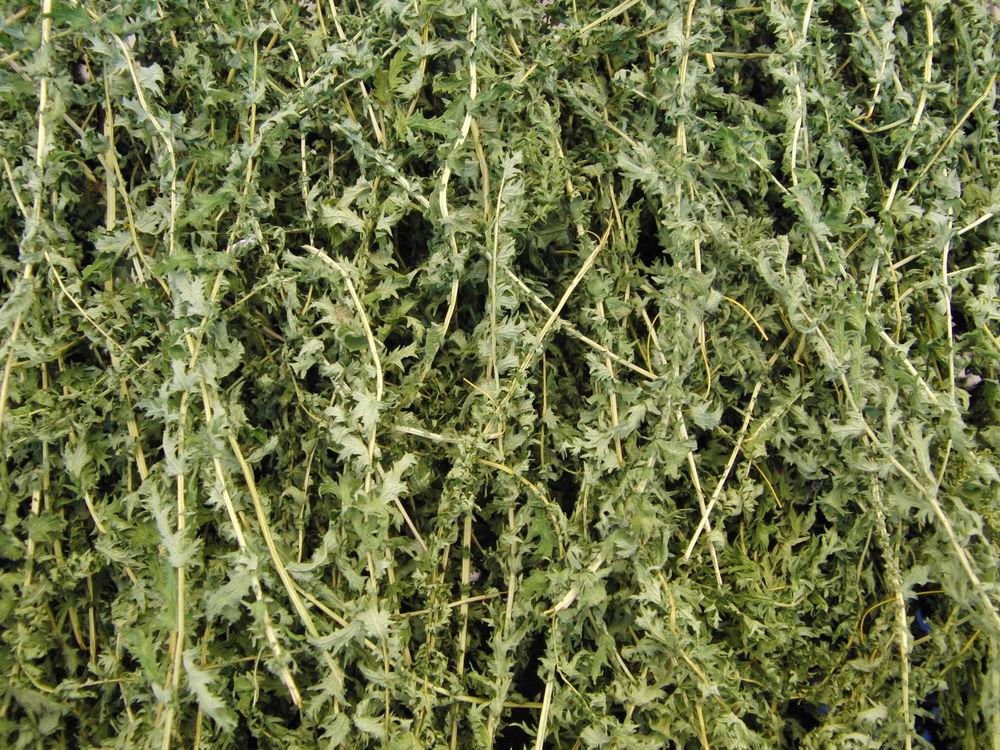 лабазник обыкновенный, лабазник шестилепестковый, фитолавка фито-лавка, купить травы почтой, травы почтой по россии
