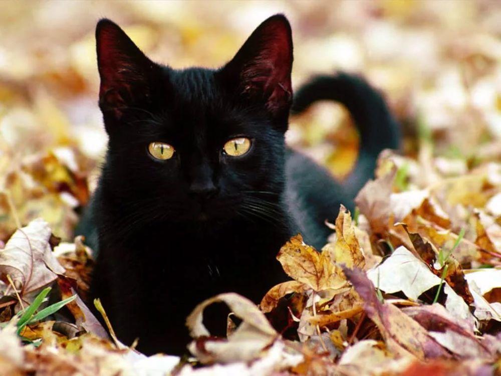 коты кошки