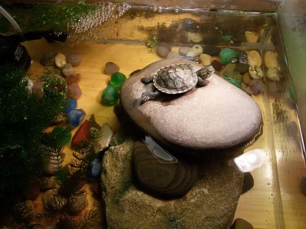 горка для черепахи своими руками фото гостям каток предлагает