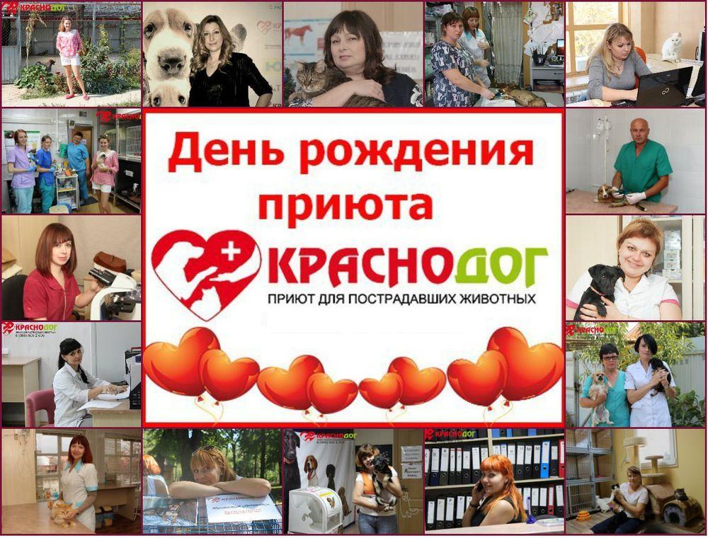 благотворительный аукцион, благотворительность, благотворительная ярмарка, аукцион, приют, помощь животным, аукцион ручной работы, краснодог, мастерская златолист, златолист