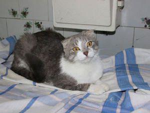 Про удивительную кошку | Ярмарка Мастеров - ручная работа, handmade