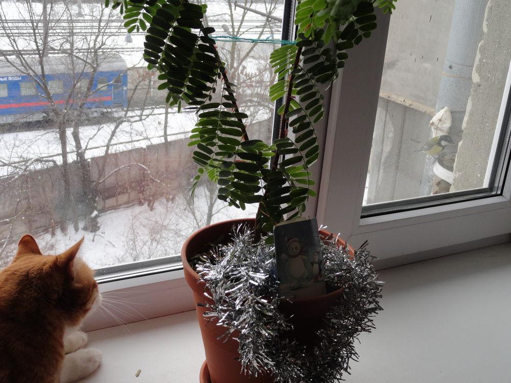 птица, травы ручного сбора, синица, кот охотится на птиц, птица в окно, кормушка своими руками