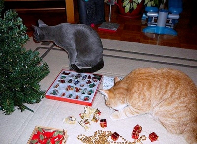 Christmas Cats! And a Little About the Safety of Pets During the Holidays, фото № 6
