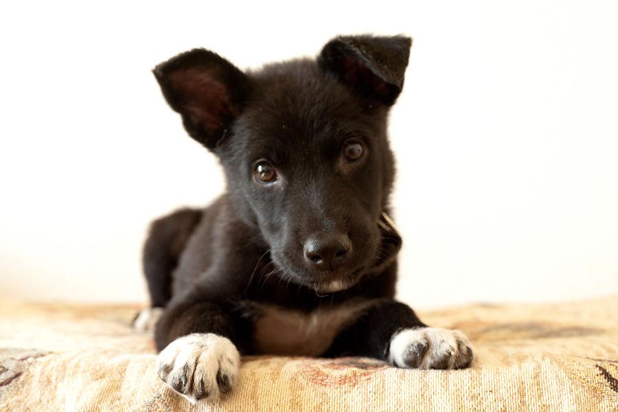 меньшие наши, помощь животным, аукцион сегодня, благотворительный аукцион