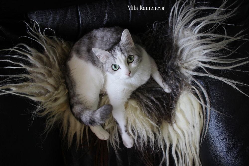 кошки, животные, мастерская, рабочее место, безопасность, мила каменева, mila kameneva, меховые ковры, валяный мех, войлок, валяние
