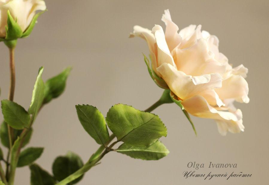 роза, флористика